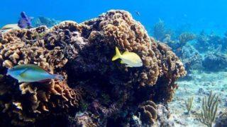 cozmel snorkeling